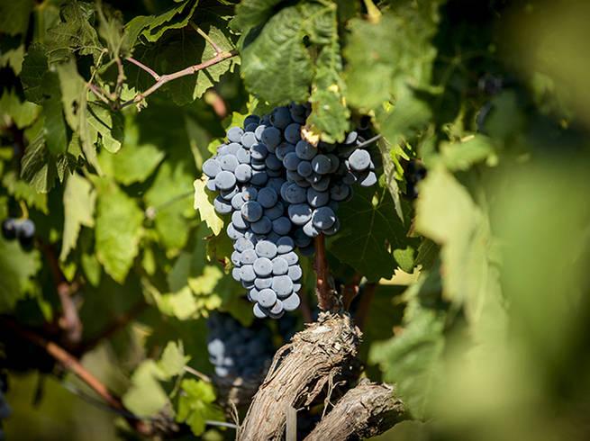 Priorat-gratavinum-del-coster-vines